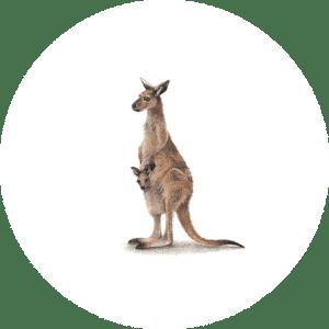 Kangaroo Mama and Baba