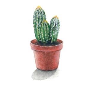 Hairy Cactus original