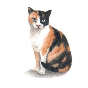 Calico Cat Original